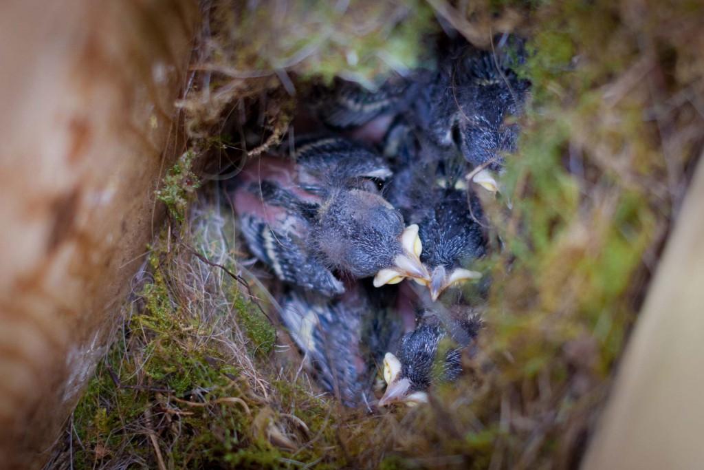 Nest Foto door Bart Hoekstra