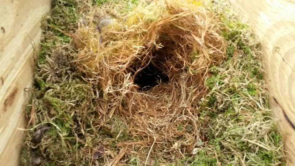 Steenuilenkast met vermoedelijk eekhoornnest (2)