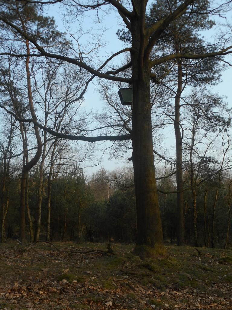 uilenkast op nestkastroute Ruud en Willem
