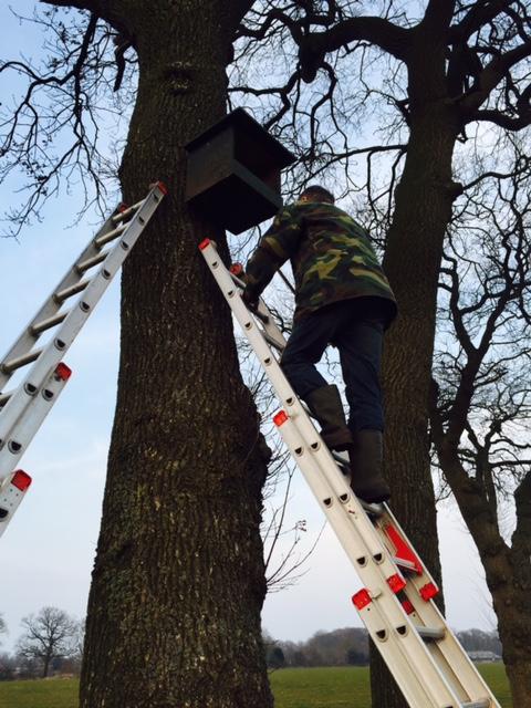 Wim Snoeken inspecteert een torenvalkenkast