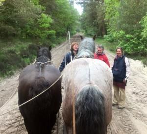 Onderweg met de paardentram
