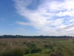 Uitzicht op het gebied waar allerlei sporen uit de oorlog te zien zijn o.a. het kamp en de wegen erom heen - foto Rosalie Martens