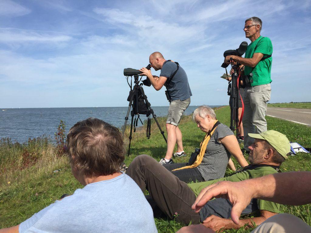 Vogelen vanaf de IJsselmeerdijk
