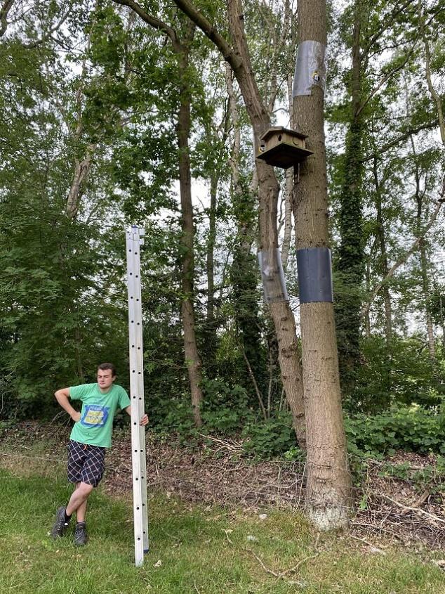 Steenuil neemt intrek in eekhoornkast