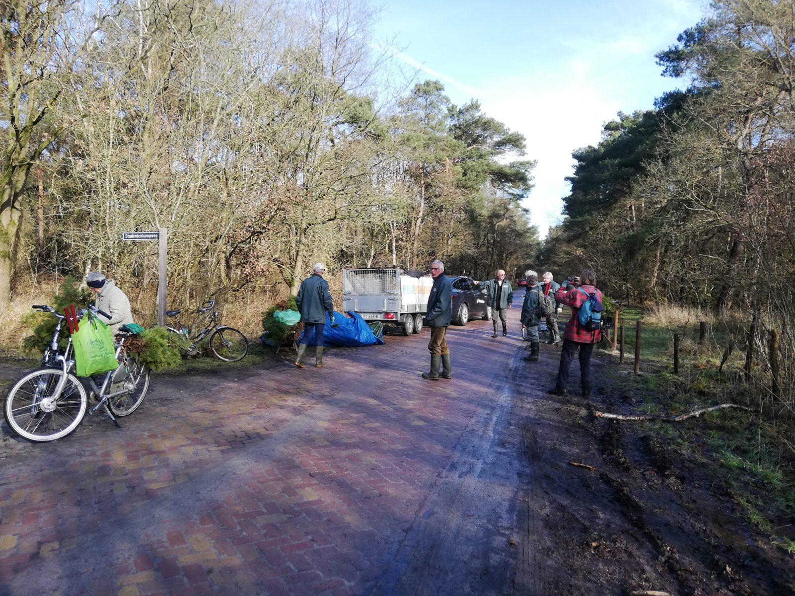De dennetjes worden verzameld langs de Kolonieweg in Havelte en vandaaruit op een aanhanger verder vervoerd.